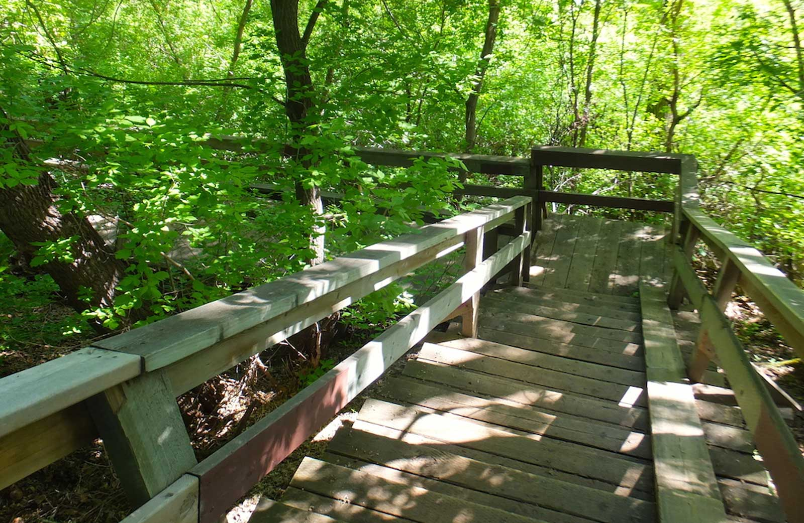 Mill Creek Ravine Walking Trails